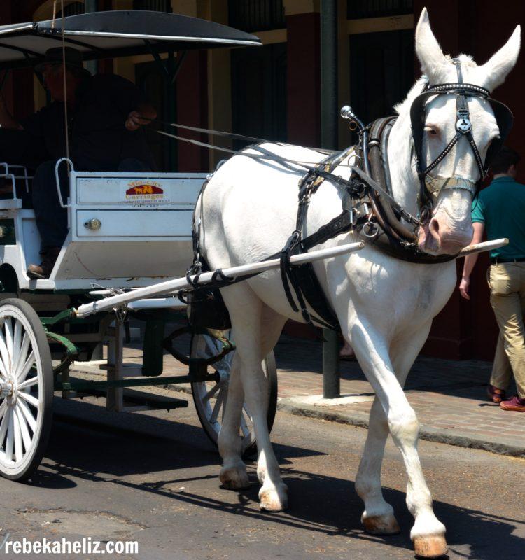 horse jackson square, new orleans, NOLA, horse, jackson square